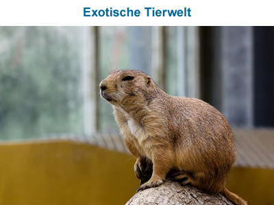 Exotische Tierwelt