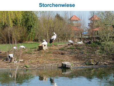 Storchenwiese